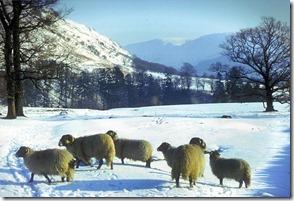 glens-of-antrim-winter-scene-sandy-brannigan