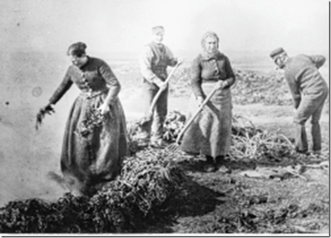 A team of crofters pictured burning kelp in Stronsay.