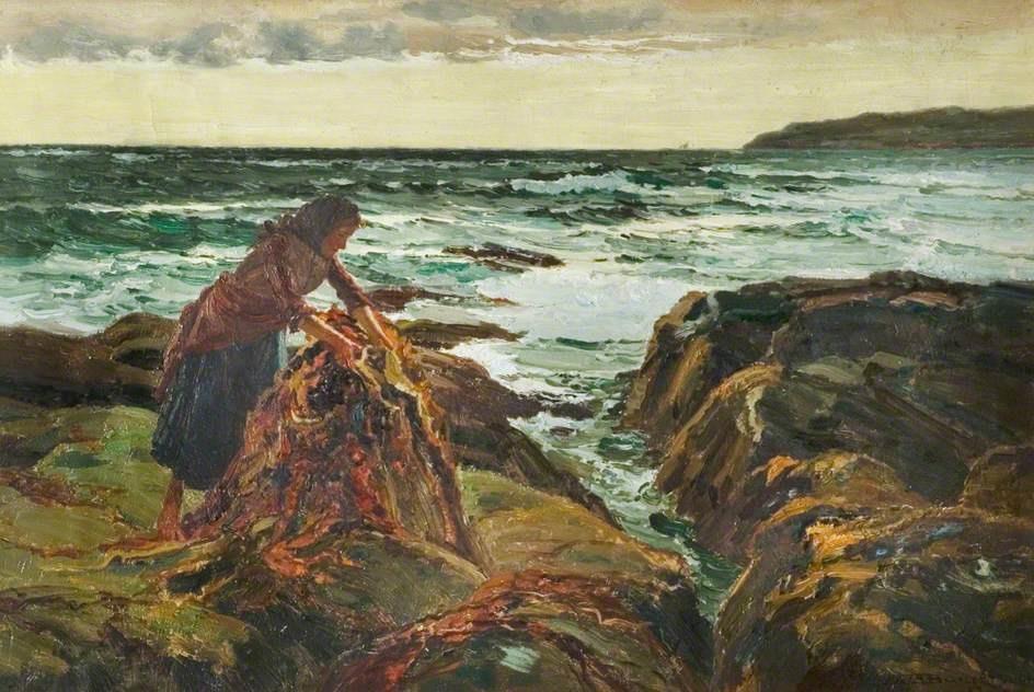 kelp iodine content